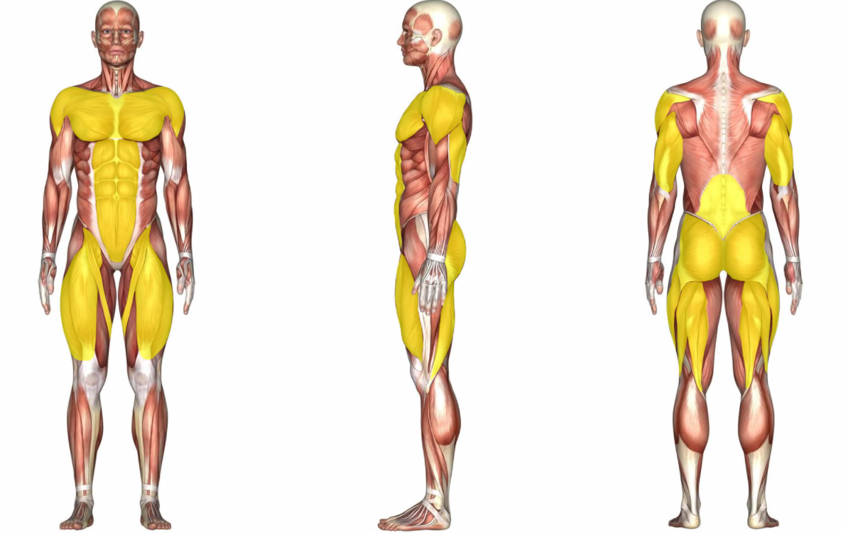 burpees-are-considerd-a-full-body-exercise-and-they-work-many-muscles-areas-including-quads-glutes-core-and-others