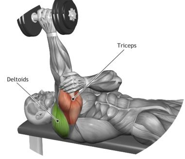 Lying dumbbell triceps extension is arguably the best exercise for your triceps