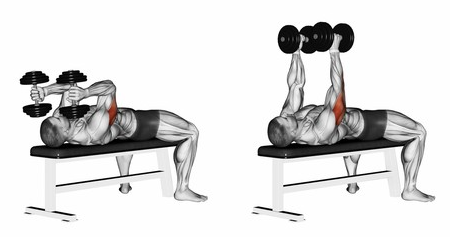 Lying dumbbell triceps extension showing muscles worked on during the exercise