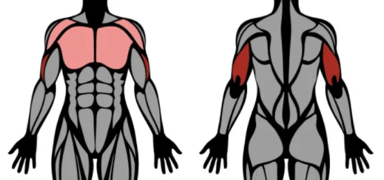 Muscles worked on by close grip bench press routine