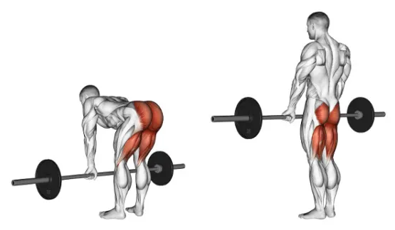 The Romanian deadlift boosts the strength of your hamstrings and glute with little pressure on knees.