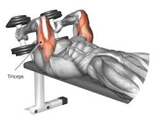 Specific muscles targeted by the lying dumbbell triceps extension workout routine